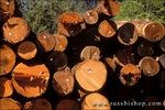 Tagged and stacked timber at mill site on the border of Redwood National Park, Humboldt County, California