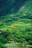 Taro fields and farm houses in Waipio Valley, Hamakua Coast, The Big Island, Hawaii