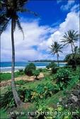 Coconut palms and lush foliage above Tunnels Beach, North Shore, Island of Kauai, Hawaii