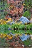 Fall color and grasses along the Merced River, Yosemite Valley, Yosemite National Park, California