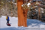 Backcountry skier enjoying the scenery at Rock Creek, Inyo National Forest, Sierra Nevada Mountains, California