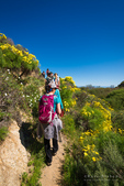 Hikers and wildflowers on the Pelican Bay trail, Santa Cruz Island, Channel Islands National Park, California USA