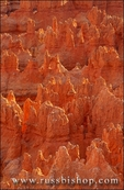 Evening light on rock formations in the Silent City, Bryce Canyon National Park, Utah