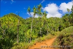 Lush vegitation along the Kalalau Trail on the Na Pali Coast, Island of Kauai, Hawaii