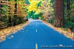 Fall color along the park road, Yosemite Valley, Yosemite National Park, California
