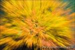 Fall color zoom, Yosemite Valley, Yosemite National Park, California
