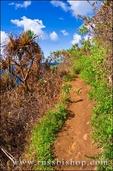 Burned vegetation from a forest fire along the Kalalau Trail, Na Pali Coast, Island of Kauai, Hawaii