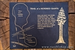 Interpretive sign on the Trail of a Hundred Giants, Giant Sequoia National Monument, California