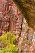 The Weeping Wall, Zion National Park, Utah