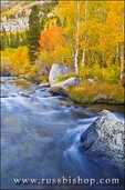 Fall color along the south fork of Bishop Creek, Inyo National Forest, Sierra Nevada Mountains, California