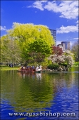 Swan boat on the lagoon at the Public Garden, Boston, Massachusetts