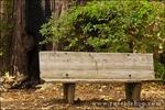 Bench on the Pfeiffer Falls trail, Pfeiffer Big Sur State Park, Big Sur, California
