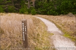 Mound Meadow Trail, Point Lobos State Reserve, Carmel, California