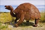 Metal tortoise sculptures by Ricardo Breceda at Galleta Meadows Estate, Borrego Springs, California USA