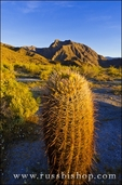 Morning light on cholla and barrel cactus under Indianhead Peak, Anza-Borrego Desert State Park, California USA