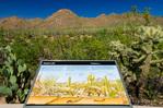 Interpretive display at the Red Hills Visitor Center, Saguaro National Park, Arizona USA