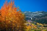Fall aspens, Toiyabe National Forest, Sierra Nevada Mountains, California USA