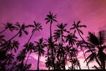 Palm trees at sunset, Pu'uhonua O Honaunau National Historic Park (City of Refuge), Kona Coast, Hawaii USA