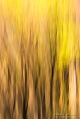 Forest abstract, Yosemite National Park, California USA