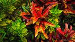 Tropical foliage in the Galaxy Garden, Paleaku Gardens Peace Sanctuary, Kona Coast, The Big Island, Hawaii USA