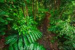 Jungle stream, Wailuku River State Park, Hilo, The Big Island, Hawaii USA