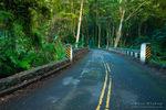 Jungle canopy along the Old Mamalahoa Highway, Hamakua Coast, The Big Island, Hawaii USA