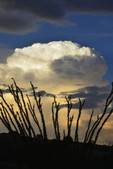 Thunderhead in summer sunset light, with Ocotillo, Box Canyon, Santa Rita Mountains.