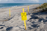 Sea Turtle Nests are protected by both Florida Law (Chapter 370) and the U.S. Endangered Species Act of 1973.  Volunteers mark active nests on Florida beaches with brightly painted posts, tape or ribbon, and warning signs to prevent accidental disturbance of the nests.