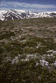 alpine tundra, above timberline