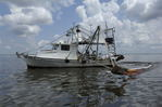 Louisiana shrimp boat pulling oil absorbent booms, Barataria Bay