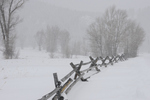 fence line in blizzard, Grand Tetons, WY