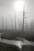 morning mist in Lower Geyser Basin, Yellowstone National Park, WY