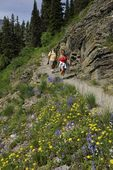 wildflowers and hikers, Glacier NP, MT