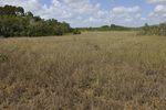 sawgrass, Everglades National Park, Fla.