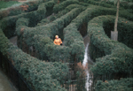 Hampton Court maze with solitary person