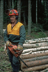 Finland, near Kajaani,lumberjack of the Kajaani company,a major producer of paper, standing in a forest holding his motor powered saw