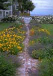 A seaside front entry garden with brick path