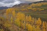 Autumn aspen near Ohio Pass, Gunnison National Forest, CO