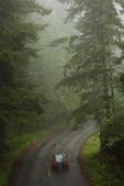 Foggy redwoods, Redwoods National Park, CA