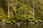 North America, USA, Alaska, Tongass National Forest, Anan Creek