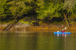 North America, USA, Alaska, Tongass National Forest, Baranof Island, Red Bluff Bay, kayaker and grizzly
