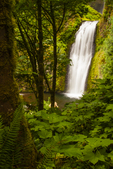 North America, USA, Oregon, Columbia River Gorge, Multnomah Falls