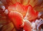 Anemone, close up & personal