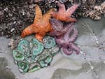 Starfish & anemones on the tidal flats