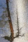 Fire & Ice--sun pillar illuminates tree