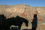 Into The Canyon. Local cowboy heads into Havasupai Canyon with supplies on his horse. This is one of the 600 side canyons of the Grand Canyon.