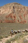 Into The Canyon. Pack horses loaded with supplies for Supai Native village, make their way down Havasupai Canyon, one of the 600 side canyons of the Grand Canyon.