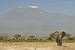 Elephant and Mountain