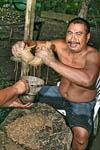 Making sakau (kava)