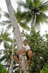 Native boy climbs coconut palm